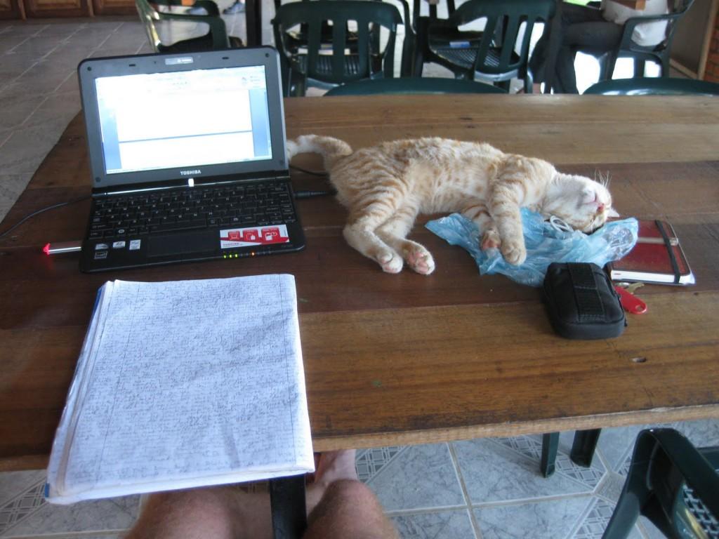 Auch so kann mal ein typischer Reisetag aussehen: Arbeiten am Blog, die Hauskatze leistet Gesellschaft. In der kolumbianischen Stadt Leticia im Amazonasgebiet
